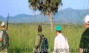 Safari Activities in kidepo valley national park