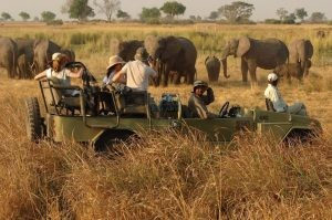 Game Drives in Kidepo valley