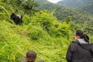 9 days fly in wildlife safari Kidepo & Bwindi gorilla trekking tour Uganda