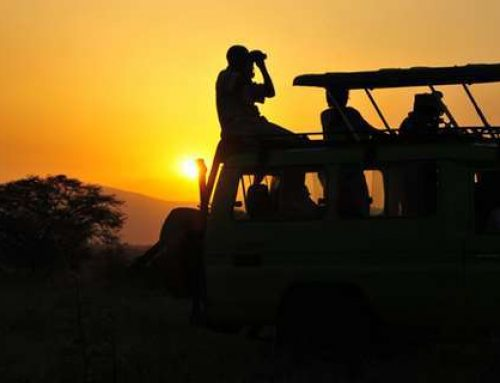 Wilderness game drives in the Kidepo Valley