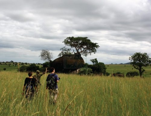 Nature Walks in Kidepo Valley National Park -Uganda Safari News
