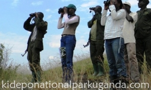 Bird Species in Kidepo Valley National Park