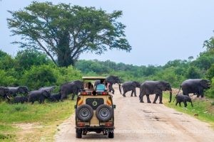 A game drive in Murchison falls National Park
