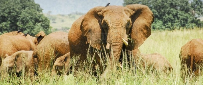 Wildlife in Kidepo Valley National Park
